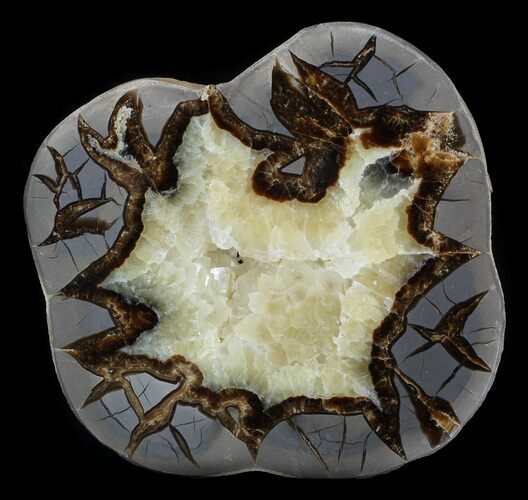 "5.7"" Polished Septarian Slice - Utah"