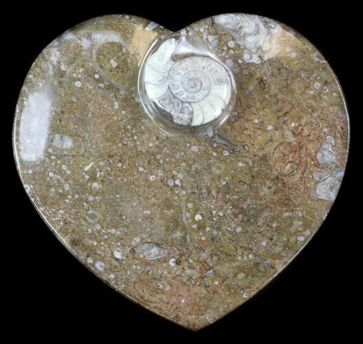 "6.5"" Heart Shaped Fossil Goniatite Dish"