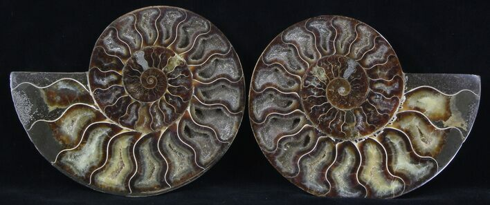 "5.4"" Cut/Polished Ammonite Pair - Agatized"
