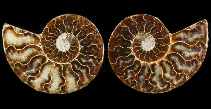 "3.1"" Sliced Fossil Ammonite Pair - Agatized"