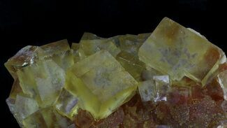 "Buy 2.7"" Lustrous, Yellow Cubic Fluorite Crystals - Morocco  - #37483"