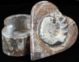 Buy Heart-Shaped Fossil Goniatites Box - (Brown) - #37975