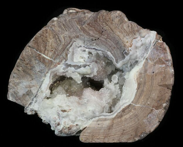 "3.8"" Crystal Filled Dugway Geode (Polished Half)"