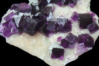 "Buy 3.7"" Dark Purple Cubic Fluorite on Quartz - Exceptional! - #39004"