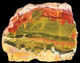 "Buy 6.3"" Marra Mamba Stromatolite - Mt. Brockman (2.7 Billion Years) - #39172"