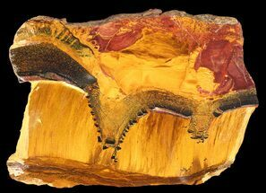 "4.9"" Marra Mamba Stromatolite - Mt. Brockman (2.7 Billion Years) For Sale, #39176"