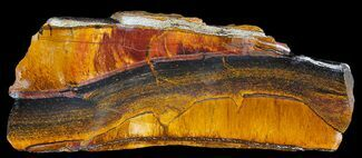 "Buy 4.5"" Marra Mamba Stromatolite - Mt. Brockman (2.7 Billion Years) - #39199"