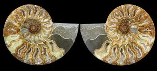 "Buy 5.35"" Cut & Polished Ammonite Pair - Crystal Chambers - #39499"