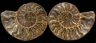 "Buy 5.65"" Cut & Polished Ammonite Pair - Crystal Chambers - #39508"