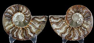 "3.2"" Sliced Fossil Ammonite Pair - Agatized For Sale, #39590"