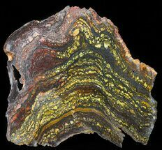 Tiger Iron Stromatolite - Fossils For Sale - #41079
