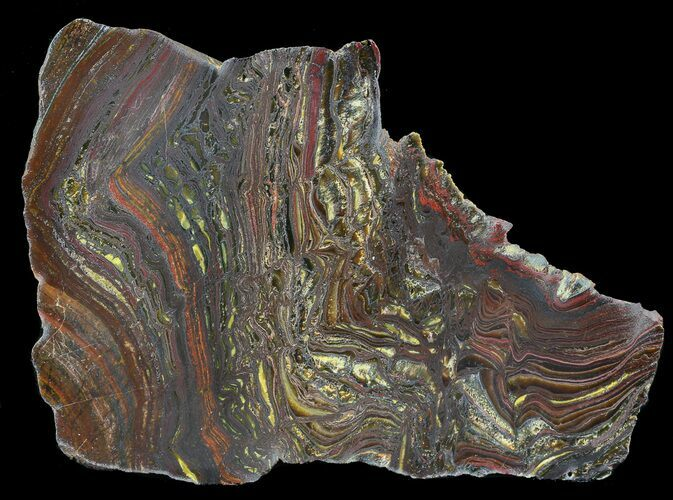 "5.7"" Polished Tiger Iron Stromatolite - (2.7 Billion Years)"