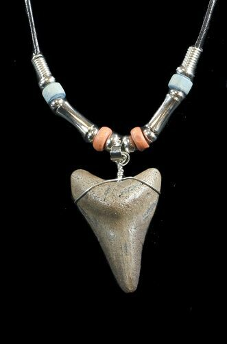 "1.6"" Fossil Megalodon Tooth Necklace"