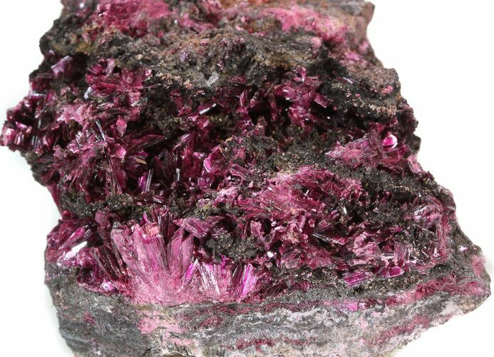 "2.7"" Magenta Erythrite Cystals on Matrix"