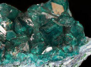 "Gorgeous 2.3"" Gemmy Dioptase Cluster - Namibia For Sale, #44660"