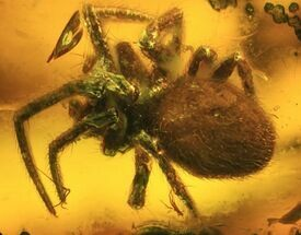Buy Fossil Spider (Aranea) In Baltic Amber - #45130