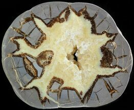 Septarian - Fossils For Sale - #45900