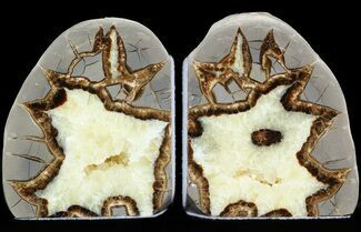 "4.1"" Polished Septarian Bookends  For Sale, #45926"