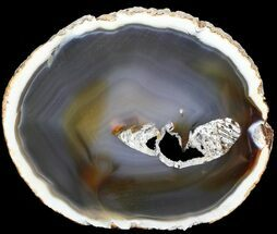 "Buy 6.0"" Polished Brazilian Agate Slice - #46072"