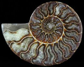 "3.8"" Agatized Ammonite Fossil (Half)  For Sale, #46532"