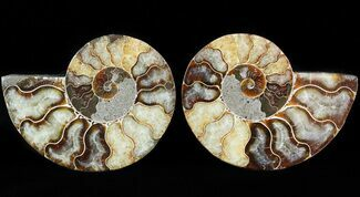 "3.6"" Sliced Fossil Ammonite Pair - Agatized For Sale, #46508"