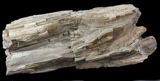 "16"" Cretaceous Petrified Wood - Texas For Sale, #48860"