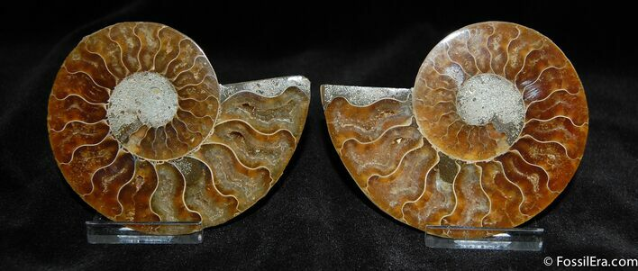 Very nice 3.5 Inch Split Ammonite Pair