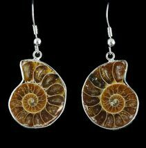 Fossil Ammonite Earrings - 110 Million Years Old For Sale, #48842