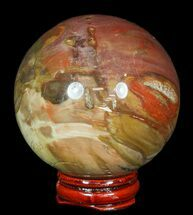 "2.7"" Colorful Petrified Wood Sphere For Sale, #49739"