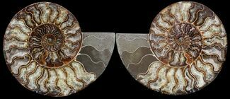 "7.8"" Cut & Polished Ammonite Pair - Agatized For Sale, #49910"