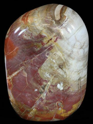 "5.6"" Polished Petrified Wood - Free-Standing Piece"