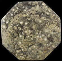 "13.5"" Octagon Shaped Tray/Platter with Orthoceras & Goniatite Fossils For Sale, #53105"