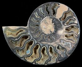 "3.4"" Split Black/Orange Ammonite (Half) - Unusual Coloration For Sale, #55661"