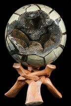 Septarian with Black Calcite  - Fossils For Sale - #55488