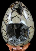 Septarian with Black Calcite  - Fossils For Sale - #59259