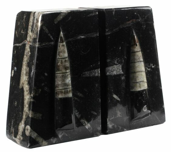 "4.7"" Polished Orthoceras Bookends - Morocco"
