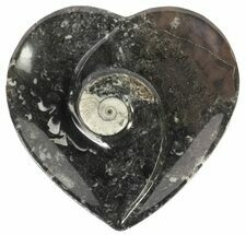 "Buy 4.5"" Heart Shaped Fossil Goniatite Dish - #61291"