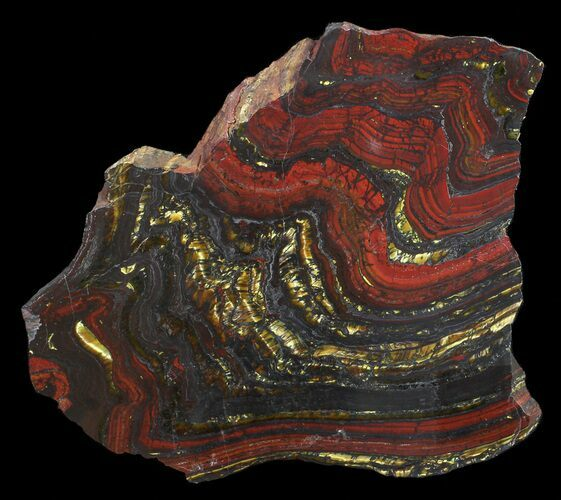 "4.6"" Polished Tiger Iron Stromatolite - (2.7 Billion Years)"