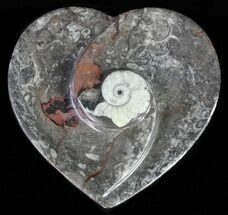 "Buy 4.5"" Heart Shaped Fossil Goniatite Dish - #61270"