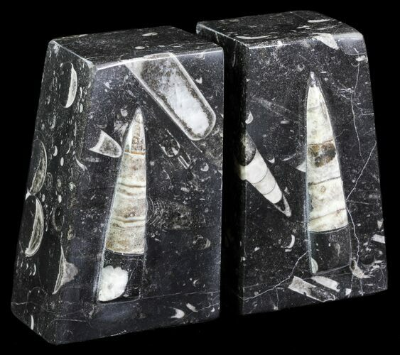 "4.8"" Polished Orthoceras Bookends - Morocco"