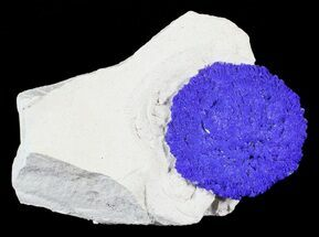 "1.1"" Brilliant Blue Azurite Sun On Rock - Australia For Sale, #63239"