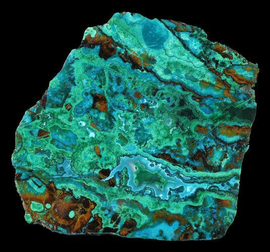 "2.3"" Polished Chrysocolla & Plume Malachite - Bagdad Mine, Arizona"