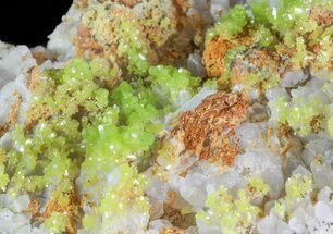 "Buy 2.3"" Pyromorphite Crystals on Quartz - China - #63688"