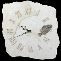 "Buy 14"" Tall Clock With Cockerellites Fish Fossil - Wyoming - #64201"