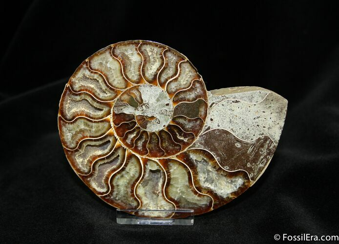 4.4 Inch Crystal Pocketed Ammonite (Half)