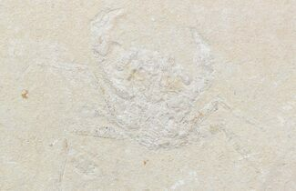 Corazzatocarcinus hadjoulae - Fossils For Sale - #43557