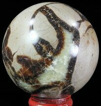Septarian - Fossils For Sale - #67863