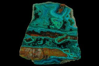 "Buy 4"" Polished Chrysocolla & Malachite Slab - Bagdad Mine, Arizona - #67687"