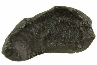 Whale (Unknown Species) - Fossils For Sale - #69669