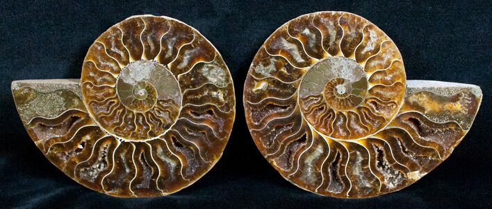 Beautiful 4.6 Inch Cut and Polished Ammonite Pair
